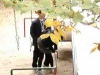 カップル盗撮!昼間の公園で一緒にブランコに乗ってハメてる、遠めのアングルがリアル